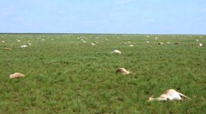 60000-antelope-die
