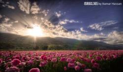 israels-flowers