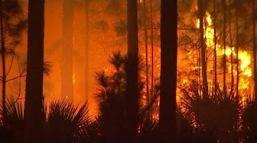 FLORIDA WILDFIRES