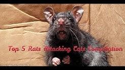 RAT ATTACKS.jpg